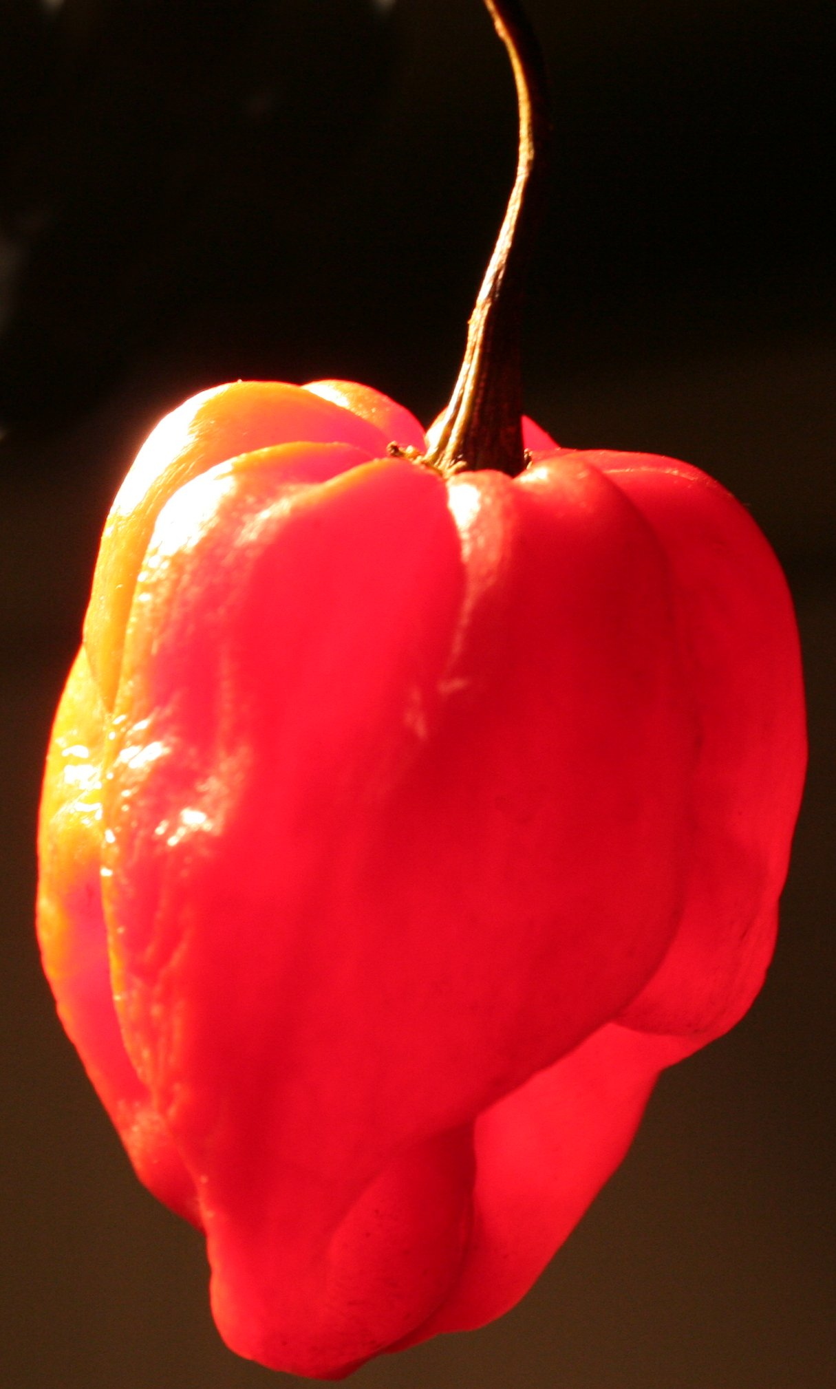 Scotch Bonnet Red Pepper Seeds